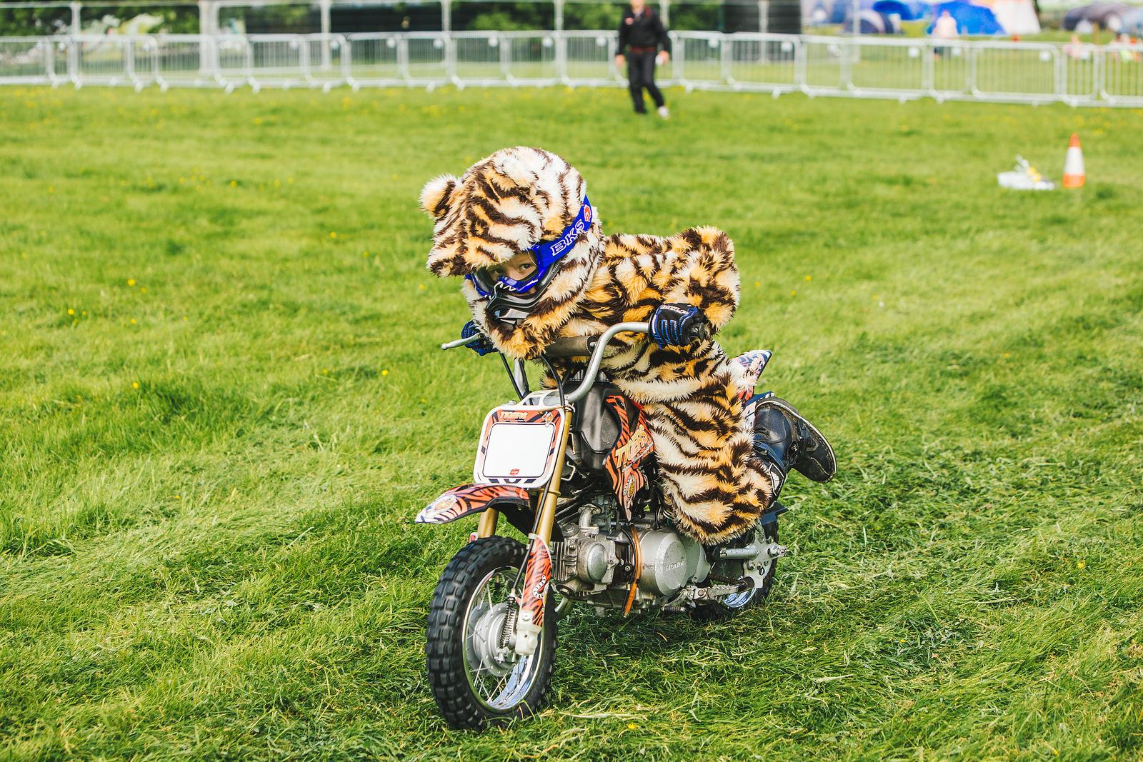 Tigers Motorcycle Display