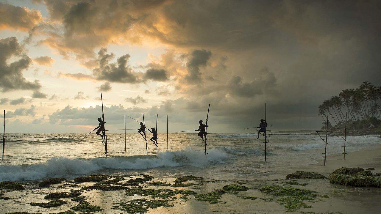 Stick Fishermen Fort Galle