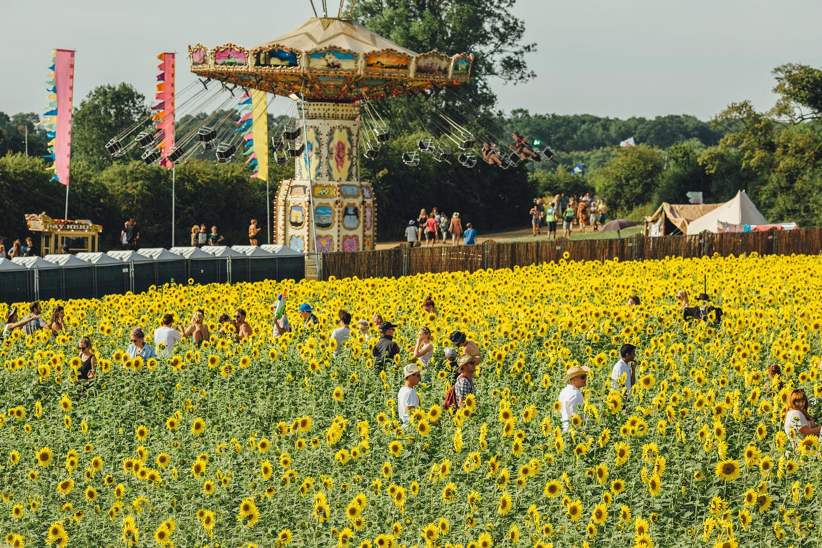 The Sunflower Field