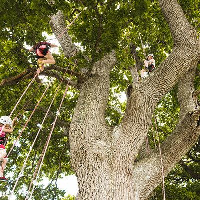 Big Tree Climbing